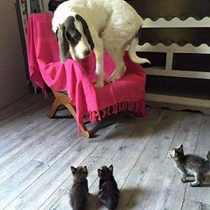 Cosas que pasan cuando juntas perros y gatos