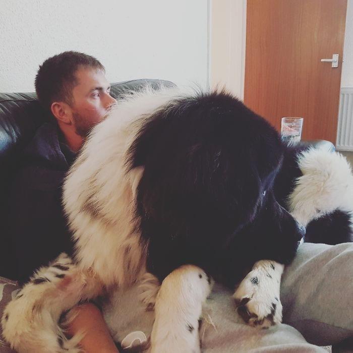 perros-creen-son-cachorros-11