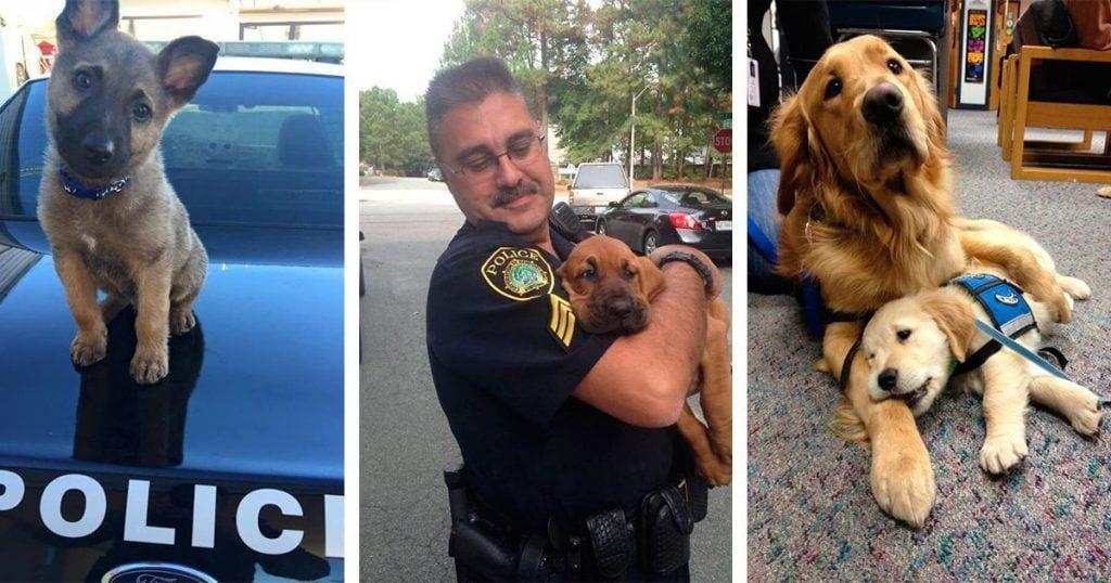 Estos perros policía se preparan para el primer día de trabajo y no pueden ser más adorables