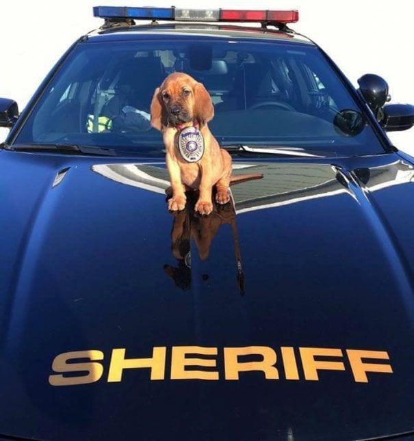 cachorro perro policia capote coche sirenas