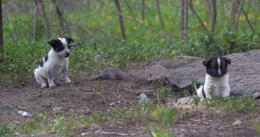 perros radioactivos destacada