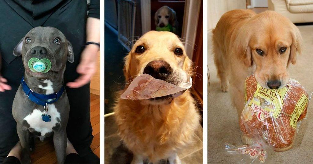 perros regalos