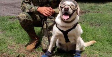 perros rescatadores mexico destacada