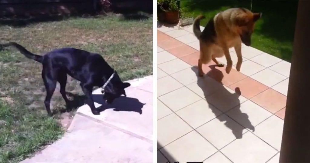 perros sombra