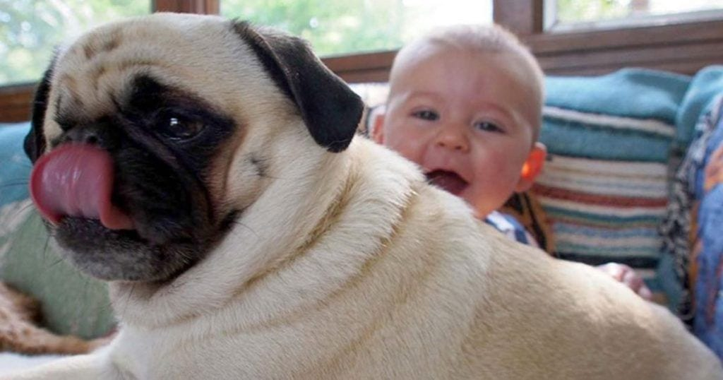 razones queremos perros