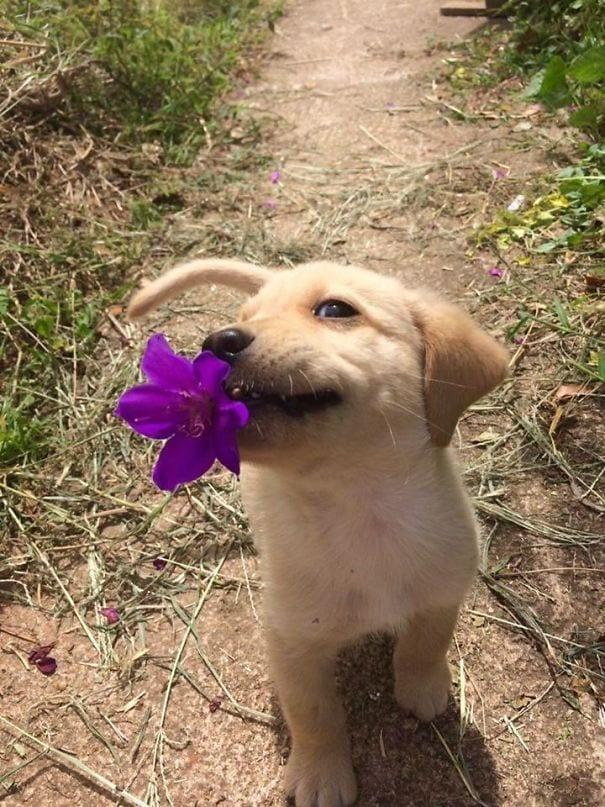 regalos-perros7