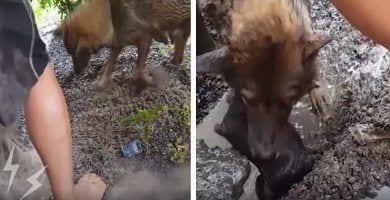 rescate cachorros agujero