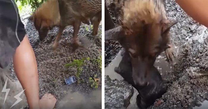 rescate-cachorros-agujero