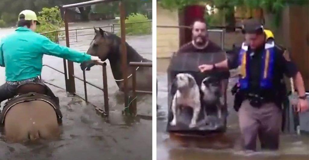 salvando-animales-huracan