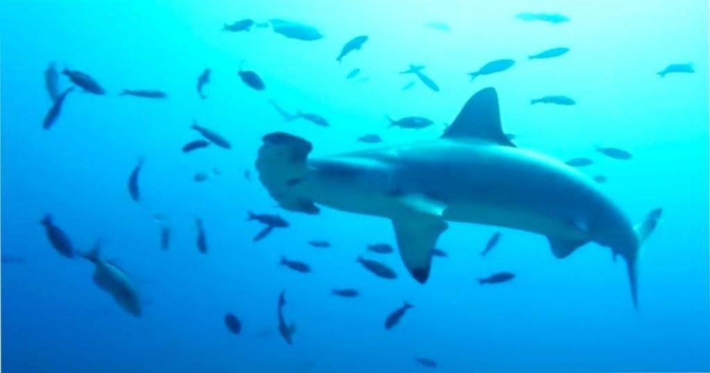 Cárcel para los responsables de la pesca ilegal de tiburones y delfines en las Islas Galápagos