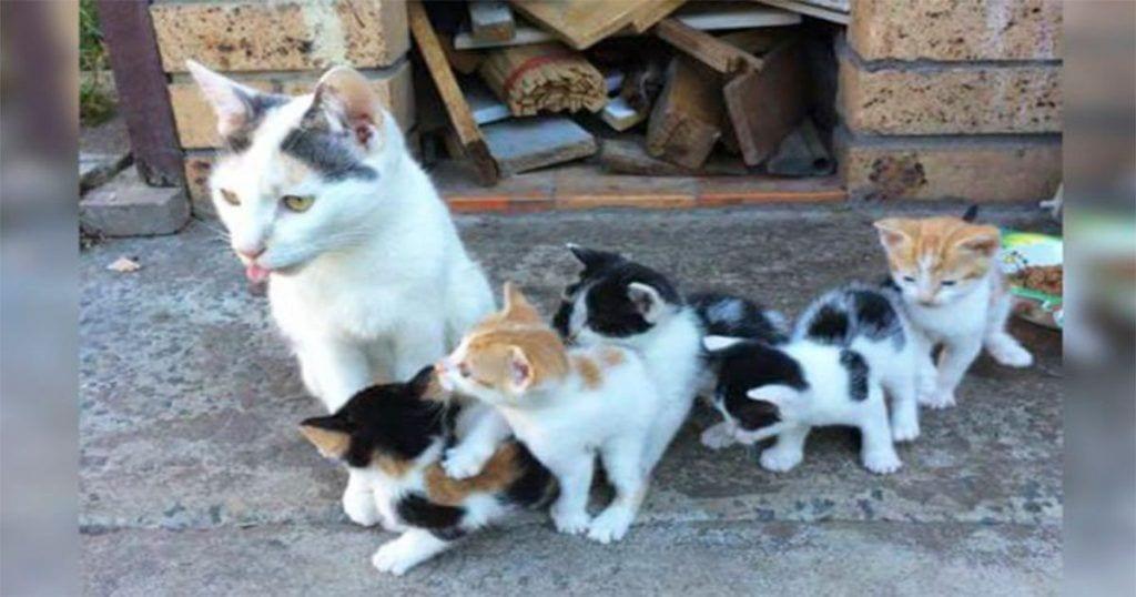 Esta madre gata consiguió salvar a sus pequeños que vivían en la calle