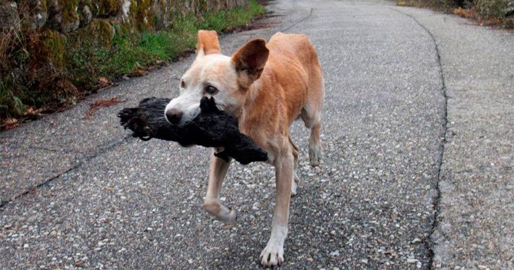 cachorro incendio galicia