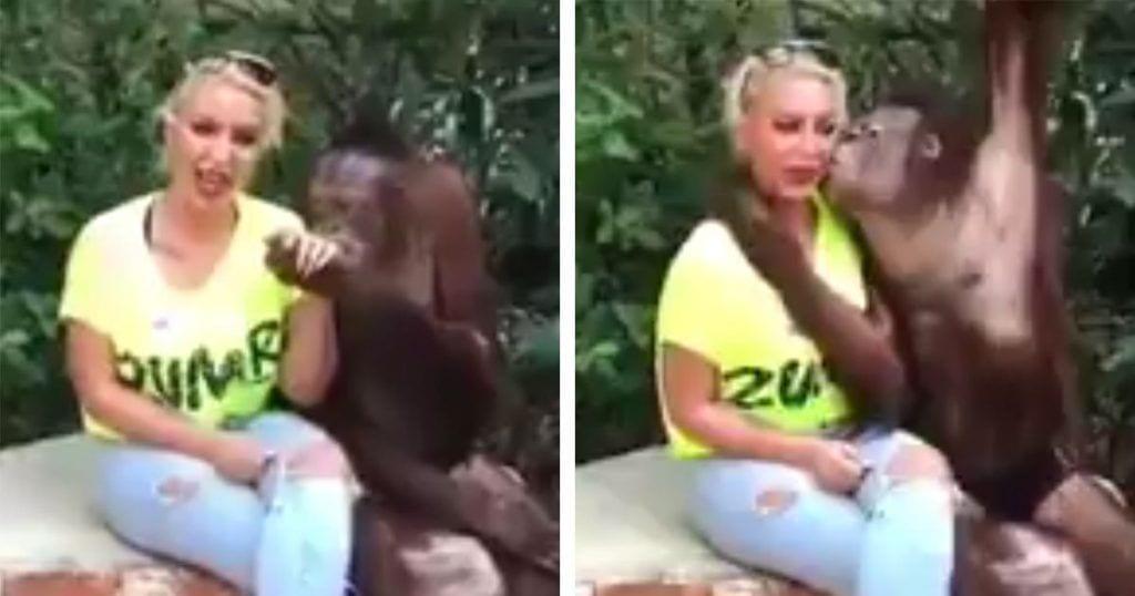 El espectáculo de un chimpancé que es de todo menos gracioso