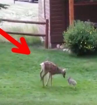 ciervo conejo amigos