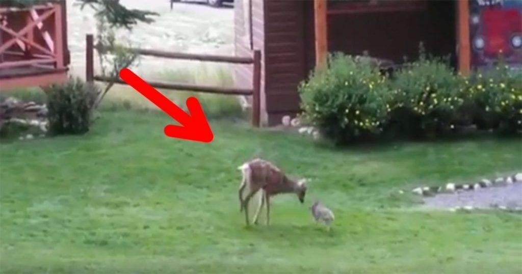 ciervo-conejo-amigos