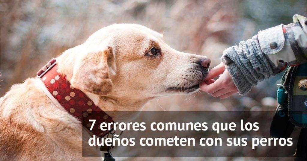 consejos perros
