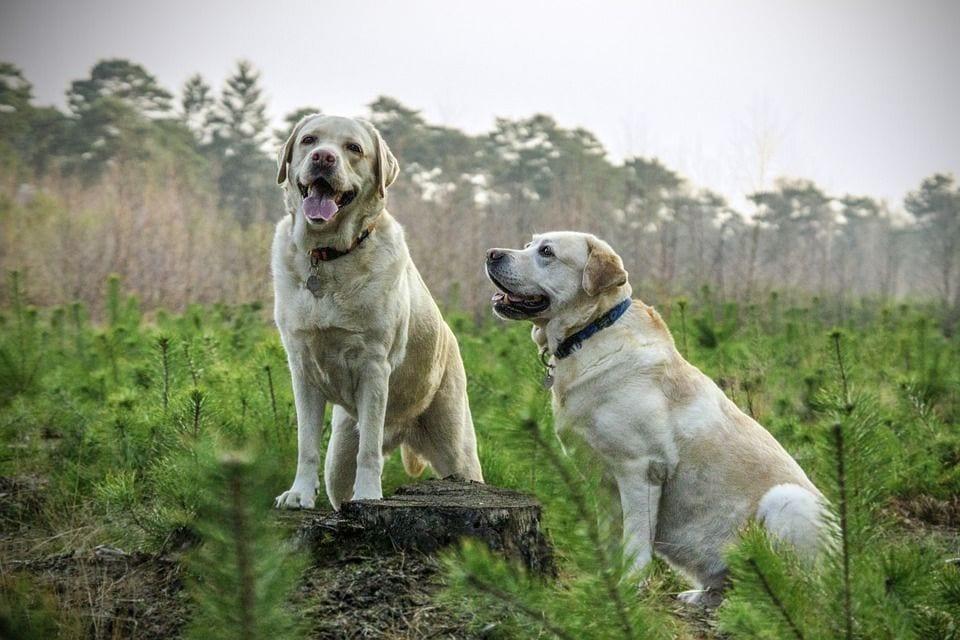 consejos-perros1
