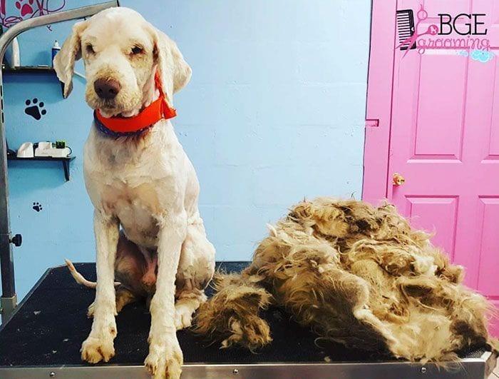 corte-pelo-perro-callejero3