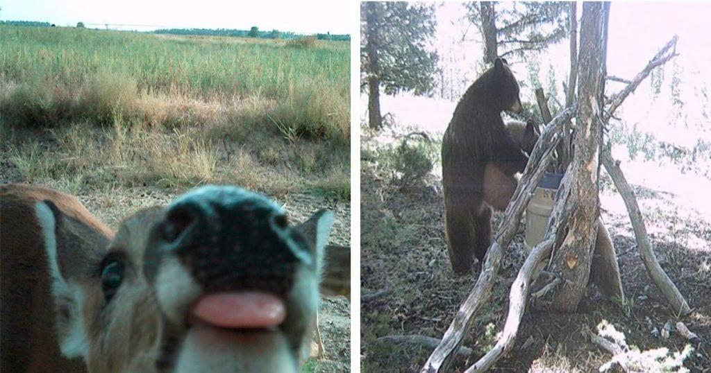 12 cosas de lo más curiosas que hacen los animales cuando nadie les ve