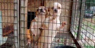 criaderos perros california
