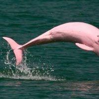 delfines rosas dest
