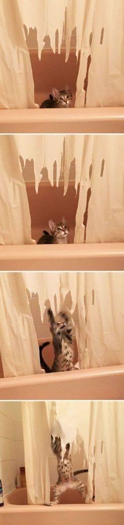 gatos-haciendo-el-mal-04