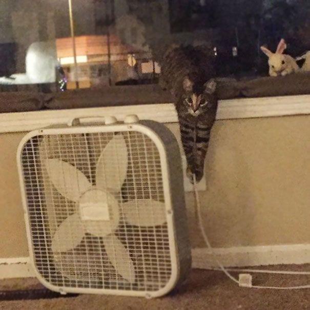 gatos-haciendo-el-mal-08