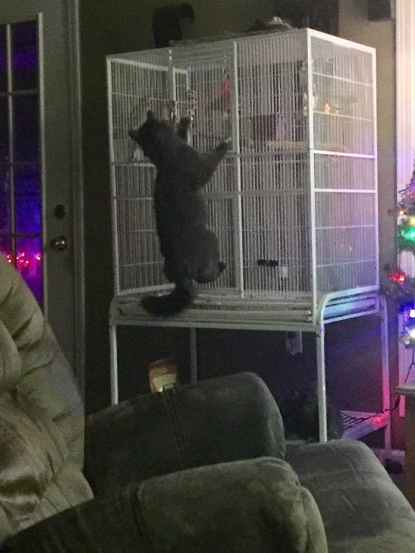 gatos-haciendo-el-mal-10