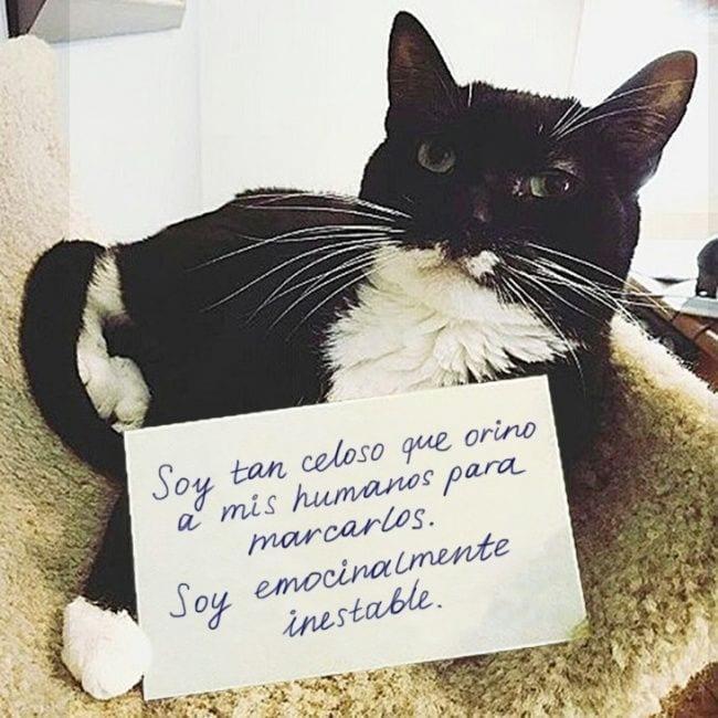 gatos-se-cree-mejor-que-tu-02