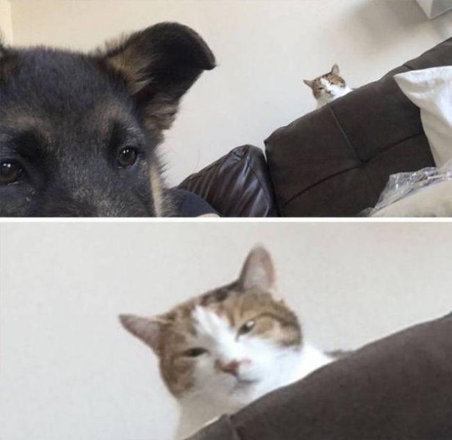 gatos-se-cree-mejor-que-tu-05