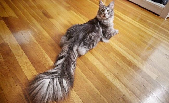 gatos-se-cree-mejor-que-tu-06