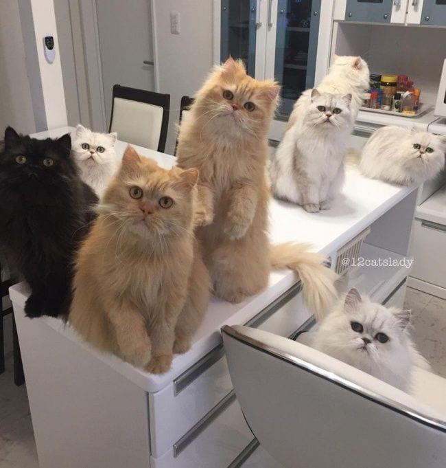gatos-se-cree-mejor-que-tu-10