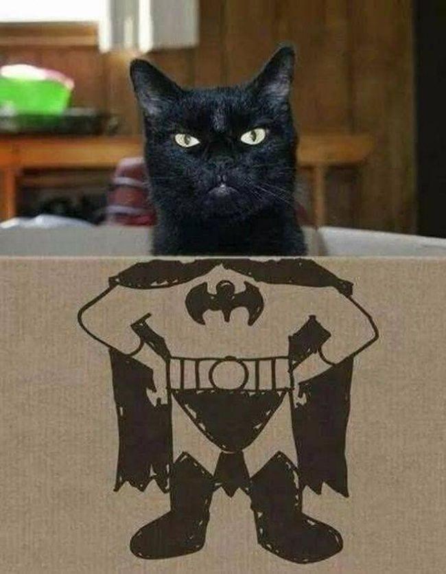 gatos-se-cree-mejor-que-tu-11