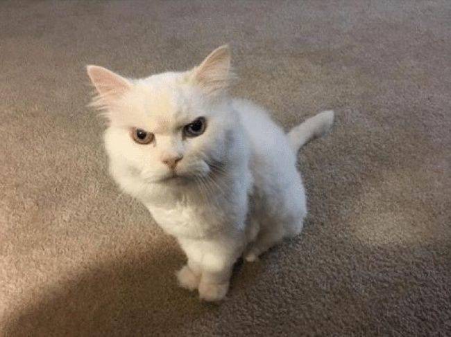 gatos-se-cree-mejor-que-tu-12