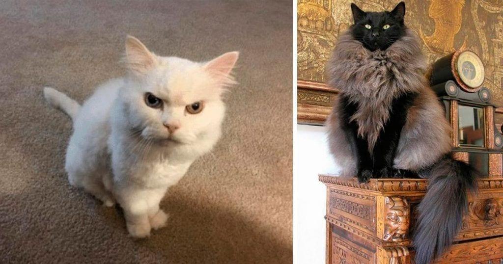 gatos se cree mejor que tu dest1