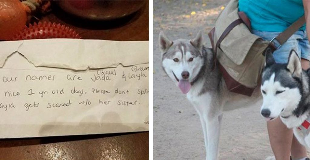 huskies abandonados nota