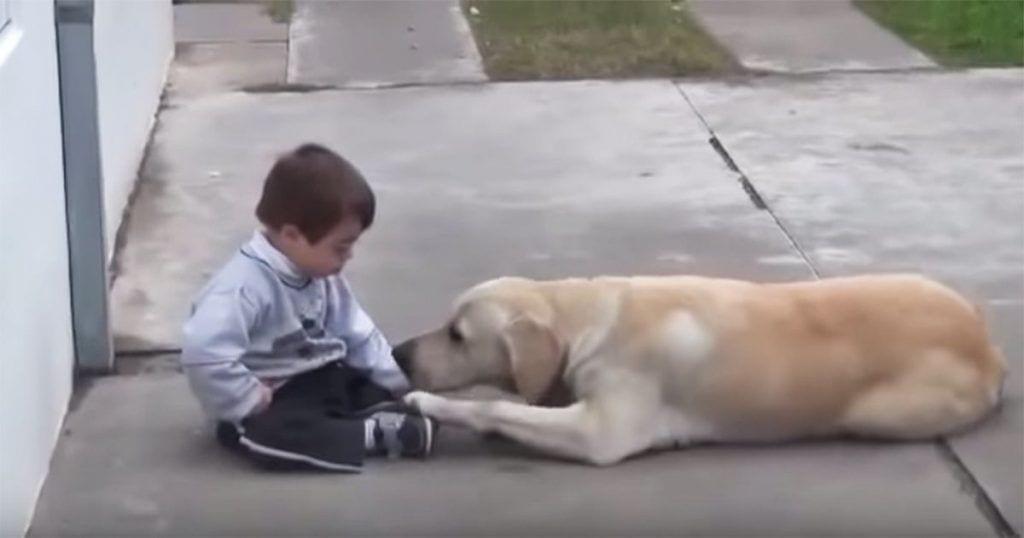 Esta perra se ha convertido en la mejor terapia para este pequeño con síndrome de Down
