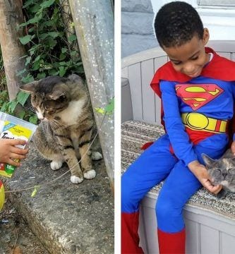 ninio superheroe gatos