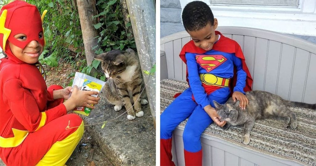 ninio superheroe gatos