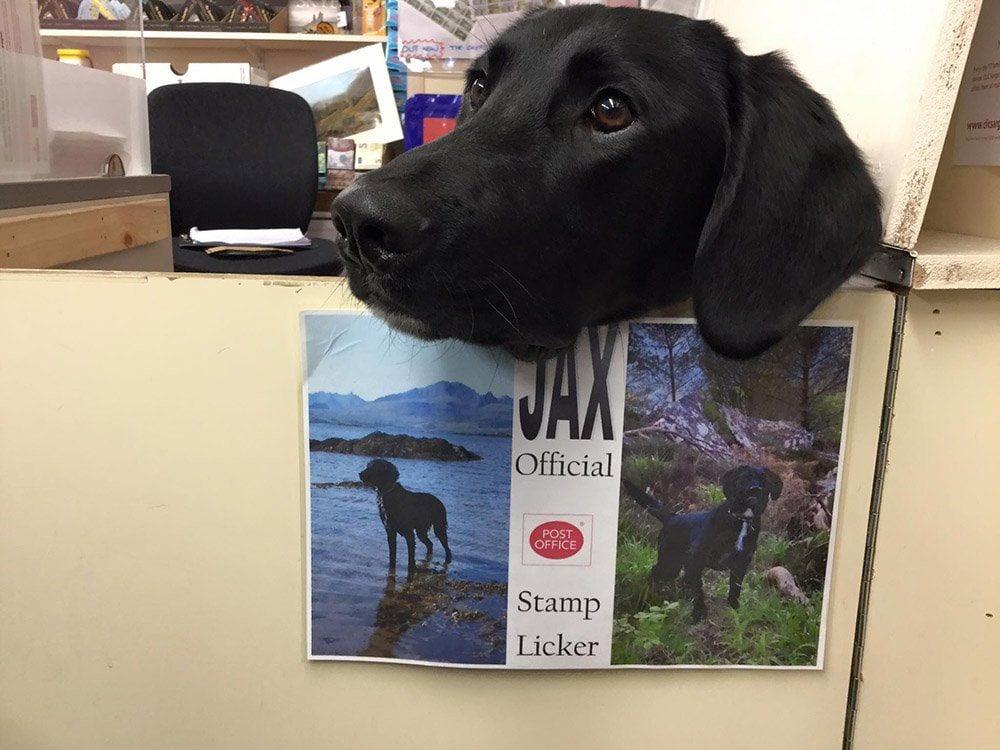 oficina-de-correos-perro-02