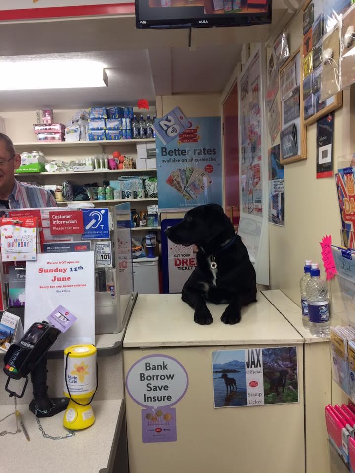 oficina-de-correos-perro-04