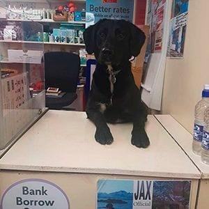 El perro que trabaja en correos