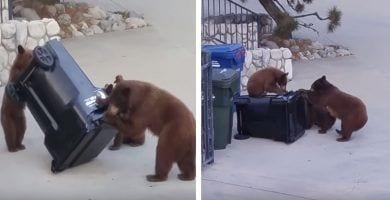 osos contenedor