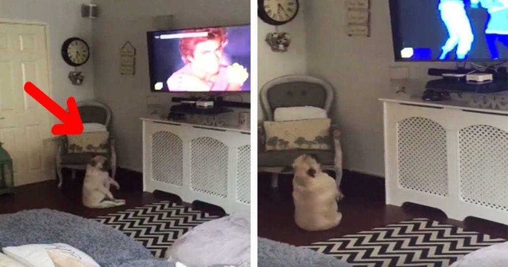 perro baila tv