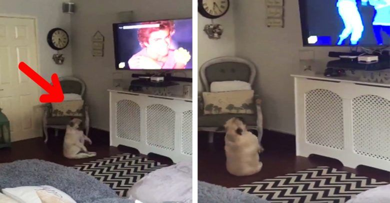 perro-baila-tv