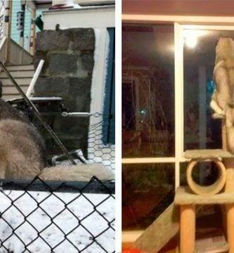 perro comportamiento gatos