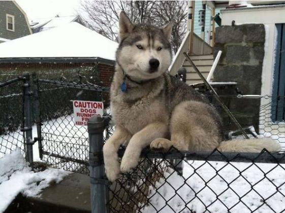 perro-comportamiento-gatos1