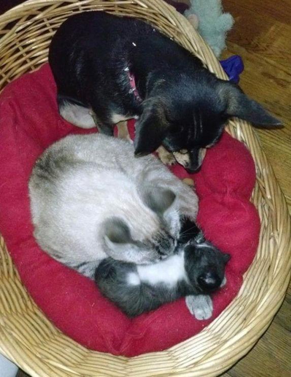 perro-comportamiento-gatos5