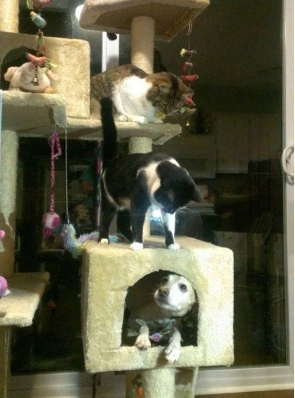 perro-comportamiento-gatos6