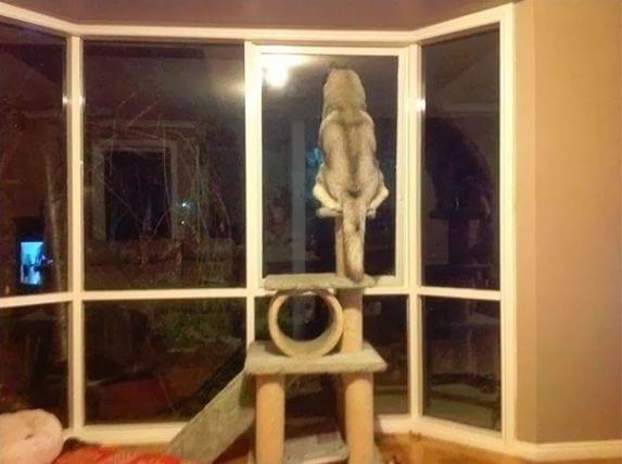 perro-comportamiento-gatos7